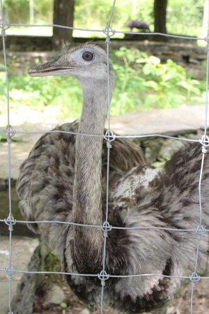 Trevor Zoo: Friendly