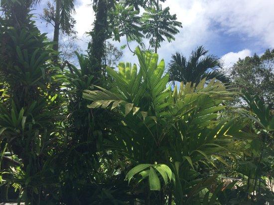 Lost Iguana Resort & Spa Resmi