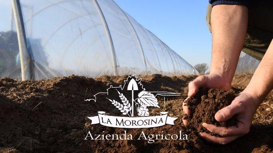 Azienda Agricola La Morosina