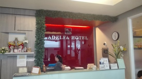 uses of adelfa About our name 'adelfa' is spanish for oleander, a wildflower found across the mediterranean we feel a kinship with the bold movement of these beguiling flowers that thrive in warm climes.