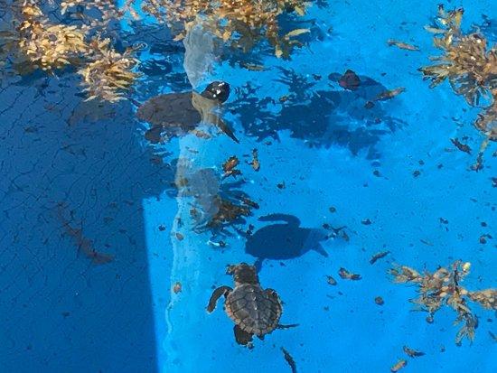 Juno Beach, FL: photo2.jpg