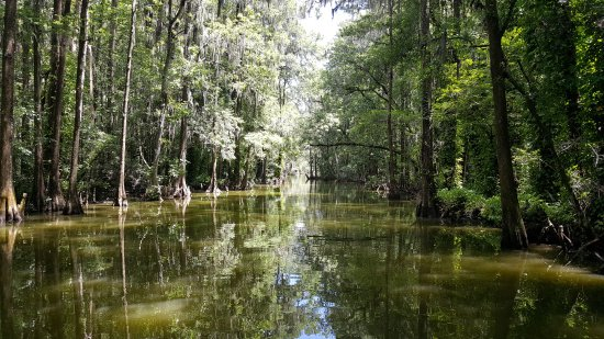 Mount Dora, Флорида: Beautiful and wild Old Florida, Mt. Dora Lake Canal