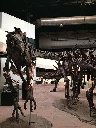 Sirindhorn Museum and Phu Kum Khao Dinosaur Excavation Site: photo3.jpg