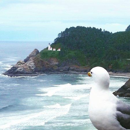 Florence, Oregon: Bird's eye view
