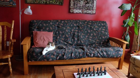Providence Bay, Canadá: Elfje - one of the two cats relaxing.