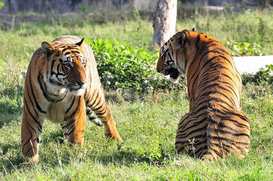 2-Day Private Tour to Ranthambhore...