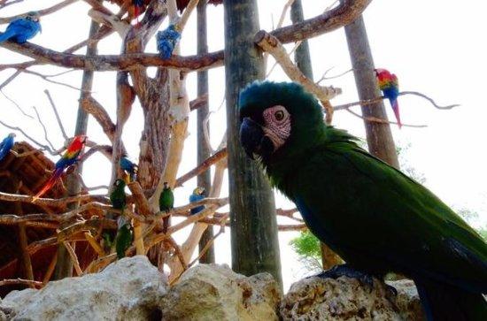 Tour Privado Nacional Aviary
