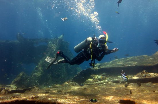 Try Scuba Diving with BALI DIVING at...