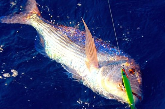 Sea-Fishing tour from Sorrento