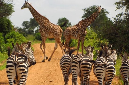 Tanzania Highlight Safaris