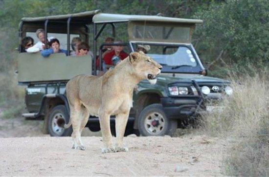 7 dagars Kruger Park från söder till ...