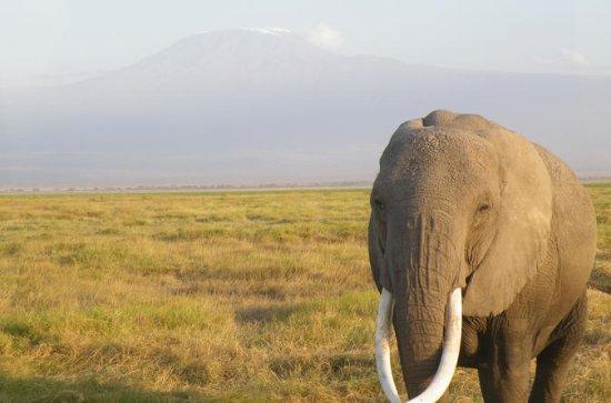 Safari al Parco Nazionale dello Tsavo