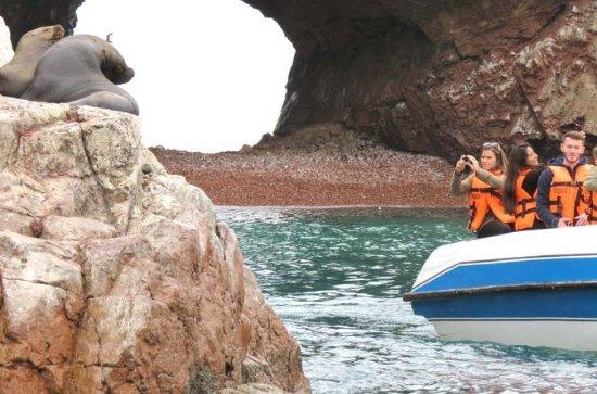Private Ballestas Islands Tour