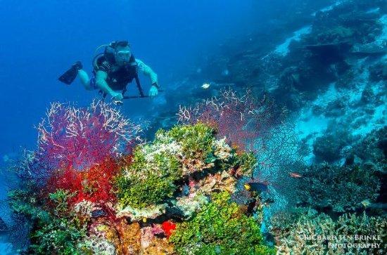 Scuba Diving Tours at Koh Tao
