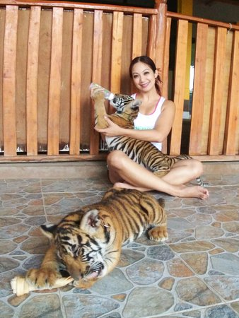 Thailand Private Tour - Day Tours: Tiger Feeding and other animals @ Safari Park