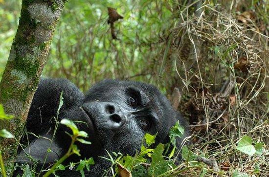 6 days Gorilla Adventure