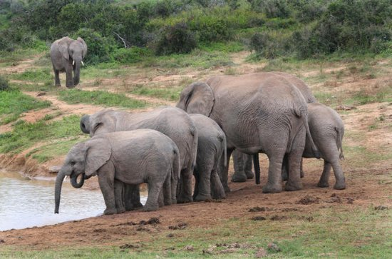 4 Day Cape to Addo Safari Tour