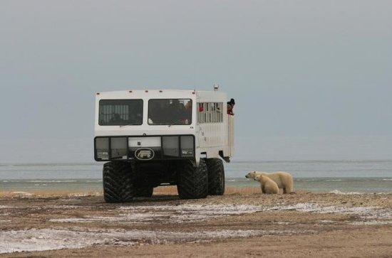 Une journée d'ours polaire