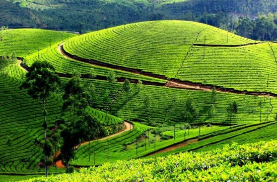 3 Days Kerala Tour Discover Tea...