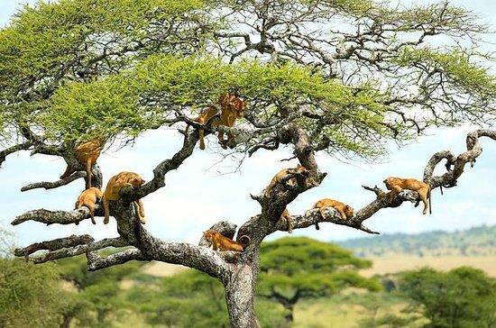 Full-Day Safari in Lake Manyara...