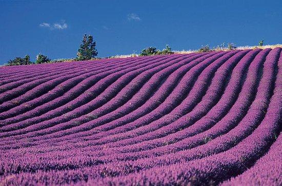Provence og Lavander - Fælles og...