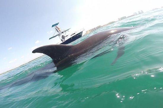 Rencontre privée des dauphins...