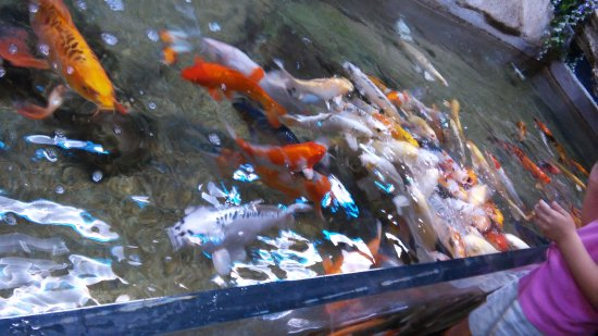 San Antonio Aquarium (TX): Top Tips Before You Go ...