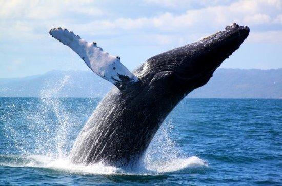 Full-Day Samana Whales Watching