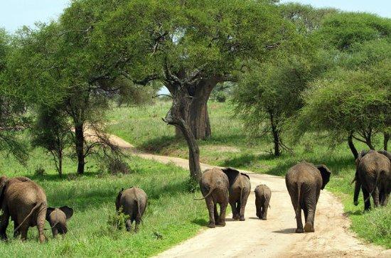 Full-Day Safari in Tarangire National...