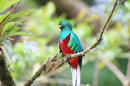 San Gerardo de Dota and Savegre river bird watching and nature guided...
