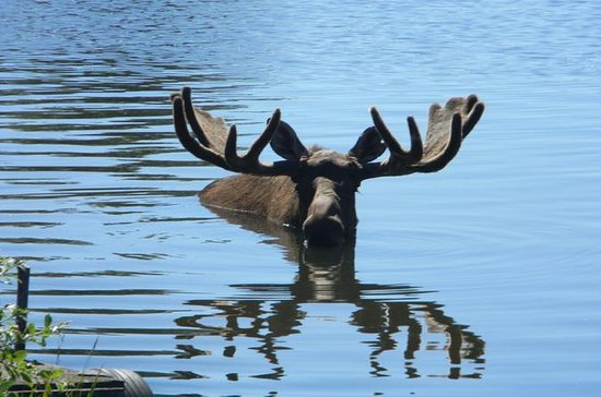 Seward to Anchorage Cruise Transfer...