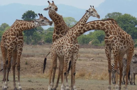 3 Tage - Exploring Selous Game Reserve