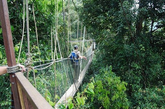 4-Day Jungle Experience in Taman...