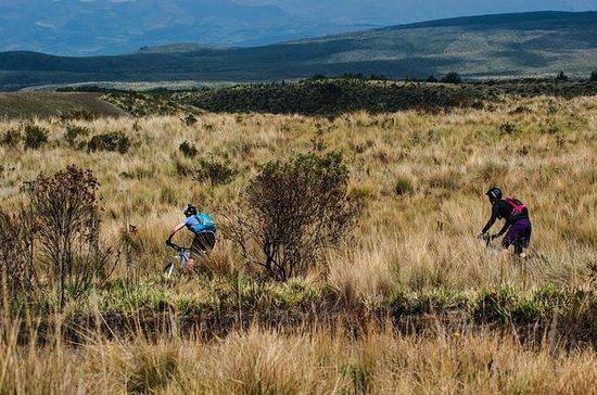 Antisana sykler