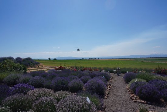 Madras, Oregón: They even had someone come in by Helicopter while we were there.