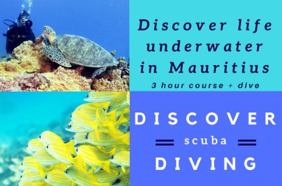 Discover Scuba Diving (beginners and...
