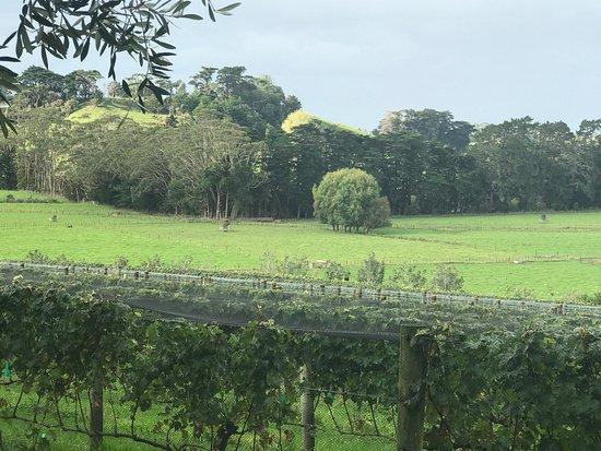 Warkworth, Yeni Zelanda: photo1.jpg