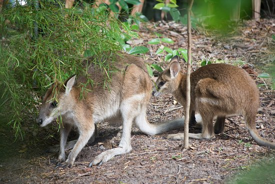 Kewarra Beach Resort & Spa: These two spent most of the day about two meters from our front porch.