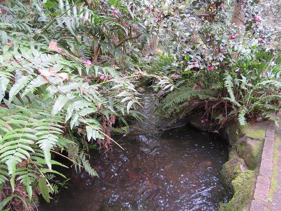 Caringbah, Australien: Flowing Creek