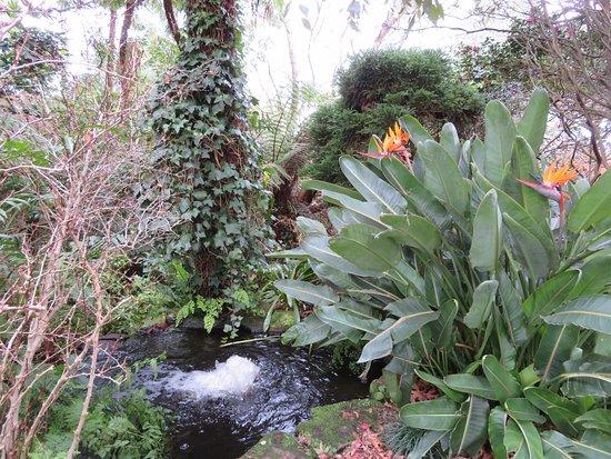 Caringbah, Australien: Beautiful Gardens
