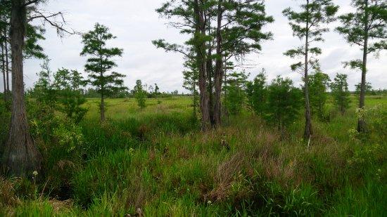 Folkston, جورجيا: Okefenokee 5