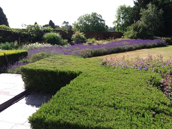 Betchworth, UK: Lovely Rosemary clipped hedges. Something I'll be trying at home.