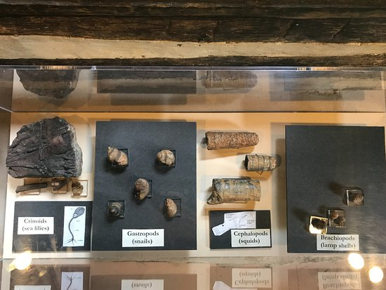 Mineral Point, WI: A display of fossils found in this area