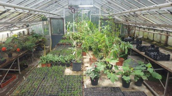 Der Botanische Garten Picture Of Botanical Garden Munster