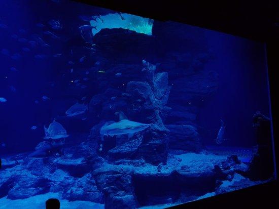 Aquarium Mare Nostrum: 20170624_140743_large.jpg
