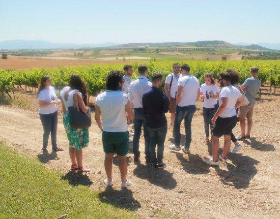 Serdiana, Italy: Wine tour