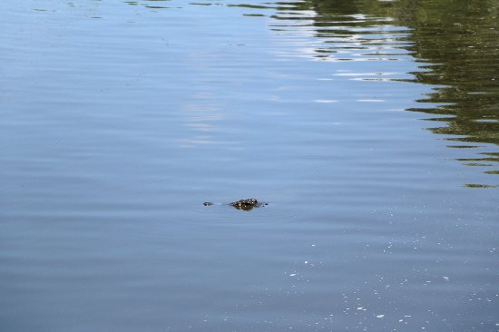 Arusha Region, แทนซาเนีย: Just one crocodile eye
