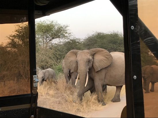Hazyview, Güney Afrika: photo1.jpg