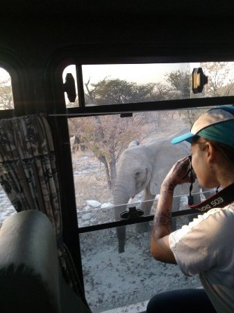 Windhoek, Namibia: Custo built safari vehicles with large windows allow for incredible wildlife viewing