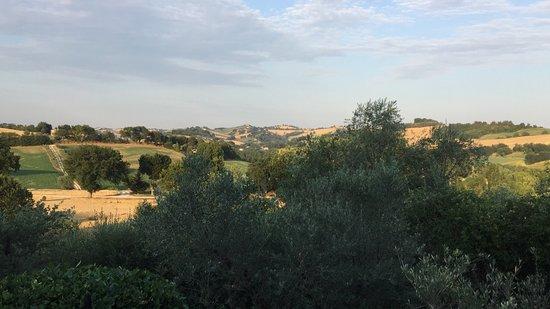 Mogliano, Italy: The view